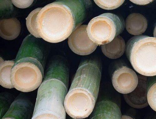Bamboo Blur Tinted Moisturizer